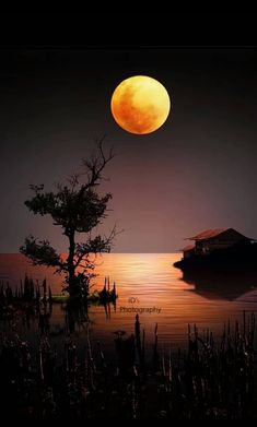 Beautiful Nature Wallpaper, Beautiful Sunset, Beautiful Landscapes, Nature Pictures, Beautiful Pictures, Moon Images, Shoot The Moon, Outdoor Pictures, Moon Painting