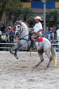 e005d361 31 mejores imágenes de grandes vaqueros en 2018 | Vaqueros, Animales ...