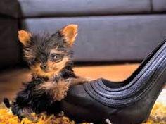 Resultado de imagen para perritos pequeños