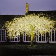 lighting by Bruce Munro