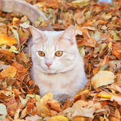 Buddy the Cat in leaves