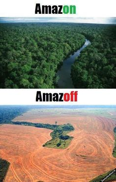 Ecology. This is why we must save the rainforest