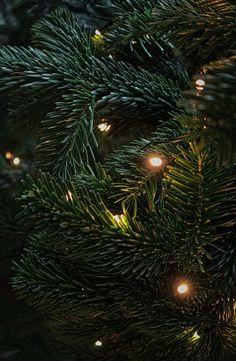 Christmas Lights Background, Christmas Lights Wallpaper, Christmas Phone Wallpaper, Christmas Aesthetic Wallpaper, Wallpaper Aesthetic, Winter Wallpaper, Lit Wallpaper, Wallpaper Downloads, Wallpaper Backgrounds