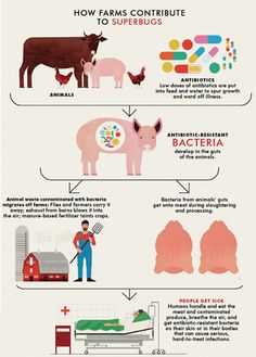 Factory Farms not only contribute to Superbugs, but also to cross-contamination of produce - see how