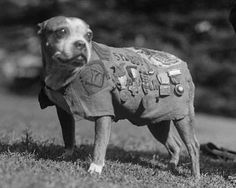 Stubby - Read more about this heroic dog here: http://amhistory.si.edu/militaryhistory/collection/object.asp?ID=15