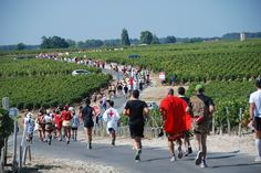 Marathon Du Médoc - September in France's Médoc region in compulsory fancy dress - are expected to indulge in 23 glasses of the famed vintages en route, while also stuffing themselves with local specialities such as oysters, foie gras, cheese, steak and ice-cream