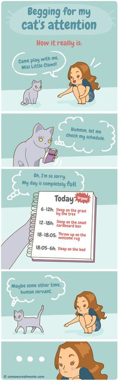 How I really... :: Busy cat schedule | Tapastic Comics - image 1