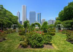 Urban garden in Chicago. #urban #nature #garden