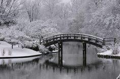 https://flic.kr/p/6z9kQM | Japanese Garden | Photo credit: Erin Whitson Courtesy Missouri Botanical Garden