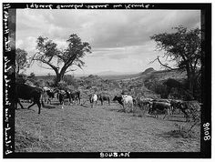 where Karen lived Kenya Colony Rift Valley en route to Nairobi In the Rift Valley Lake Naivasha in distance Mentioned in the writings of Rider Haggard All About Africa, Out Of Africa, East Africa, Rift Valley, British Colonial Style, Happy Valley, Nairobi, Africa Travel, Historical Photos