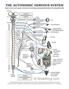 this teaches the definition of lymphatic system and its