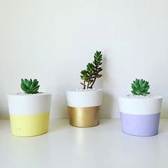 This listing is for one small (10.5 cm wide on the top) pink concrete pot with the plant and white stones.  PICKUP ONLY in WEST MELBOURNE  If