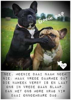 Good Night Sleep Tight, Good Morning Good Night, Good Night Quotes, Cute Quotes, Funny Quotes, Evening Greetings, Afrikaanse Quotes, Goeie Nag, Quotes For Whatsapp