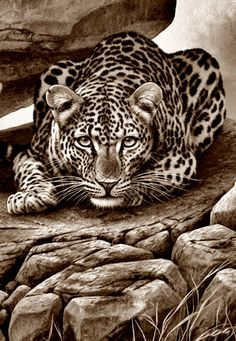 Drawing Pencil Portraits - Coloring for adults - Kleuren voor volwassenen Discover The Secrets Of Drawing Realistic Pencil Portraits Pencil Drawings Of Animals, Animal Sketches, Art Drawings, Hipster Drawings, Drawing Faces, Manga Drawing, Wow Art, Wildlife Art, Adult Coloring Pages