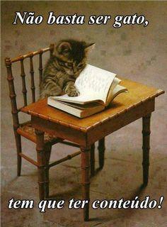 Não basta ser gato, tem que ter conteúdo!   Veja mais em: http://www.jacaesta.com/nao-basta-ser-gato-tem-que-ter-conteudo/
