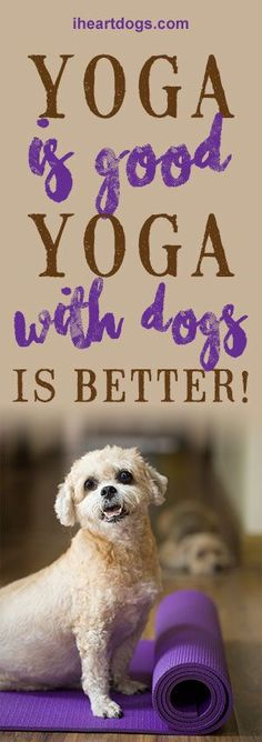 Yoga Is Good. Yoga With Dogs? Even Better.