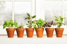 The Nine Easiest Herbs to Grow Indoors   Divine Caroline