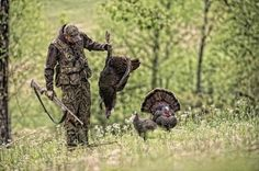 Turkey Hunting Tips: Early-Season Strutter and Jake Decoy Tactics