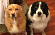 13 Guilty Dogs Who Claim They Have NO IDEA How That Mess Got There…