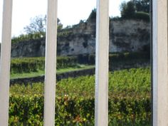 A view to one of the great Saint Emilion vineyards where the best right bank wines come in France.