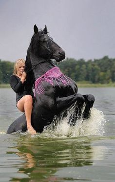 Horse riding from Water Pretty Horses, Horse Love, Beautiful Horses, Animals Beautiful, Cowboy Horse, Horse Riding, Cowgirl Tuff, Animals And Pets, Funny Animals