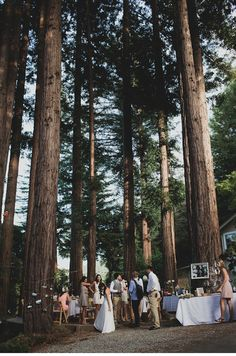 Lovely Wedding In The Woods