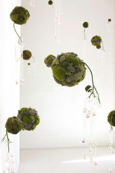 Mooskugeln mit k nstlichen zweigen von decke h ngen dekoration pinterest zweige k nstlich - Indoor krautergarten ...