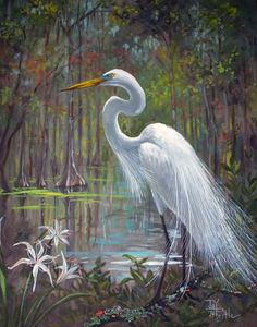 watercolor paintings of snowy egrets | Painting by Joy Postle, central Florida artist.