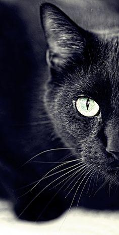 .bello,negro y de ojos verdes ,como mi adorado gato(nicolas)=que me acompañó a transitar la vida  durante 14 años y jamas olvidaré
