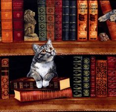 Cats in the Library - Timeless Treasures - 1 yard - More Available by BywaterFabric on Etsy