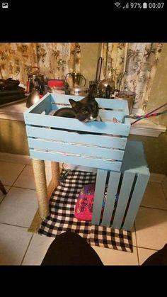 Diy Cat Tree, Cat Trees, Cat House Diy, Cat Playground, Cat Condo, Cat Room, Pet Furniture, Animal Projects, Cat Crafts