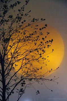 Yellow Hunter Moon www.facebook.com/loveswish