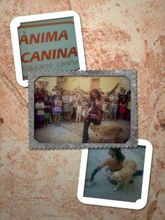 #dogdancing #dogdancingoriental #danzadelviente al Mercat Medieval Ontinyent , detallazo de Betty