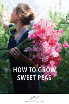 Learn the secrets to getting long stemmed sweet peas from Floret. Garden gardening flower cut flower garden cutting garden seasonal flowers blooms home gardening flower farm small farm farmer-florist floral design seasonal local seed farming microfarm Cut Flower Garden, Beautiful Flowers Garden, Flower Farm, Flower Gardening, Flower Garden Design, Cactus Flower, Sweet Pea Flowers, Small Flowers, Cut Flowers