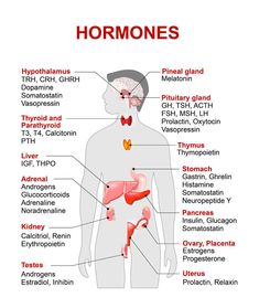 Endocrine System Diagram Endocrine System Anatomy And Physiology Nurseslabs. Endocrine System Diagram Human Body Endocrine System The Endocrine System. Medical Facts, Medical Information, Medical Science, Medical Coding, Science Biology, Learn Biology, Biology Humor, Biology Lessons, Ap Biology