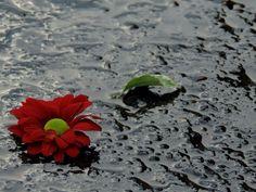 Eső után az utcán. Afrer rain