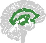 CAST UDL principle: Multiple Means of Engagement. Image of a brain with affective network shown in green