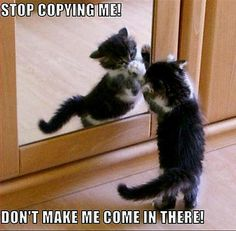 Stop Copying Me!  At Orchard Lake Pet Resort we strive to provide the best overnight care and grooming services for our canine clients!  Call (248) 372-7000 or visit our website www.orchardlakepetresort.com for more information about the services we provide!