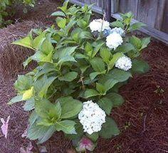 Vegetable Gardening Tips At Your Backyard - Urban Gardening Green Garden, Garden Plants, Small Farm, Garden Care, Edible Garden, Growing Vegetables, Hydrangea, Landscape Design, Home And Garden