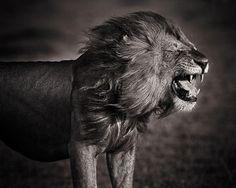 Awards and Achievements | David Lloyd Wildlife Photography