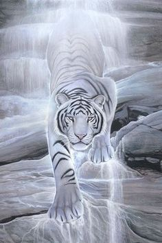 Water Spirit Tiger IPhone Wallpaper Mobile Wallpaper