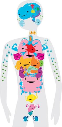 A cute and creative way to learn about all of your organs. Love this!
