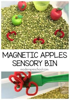 Explore magnetic apples while scooping, pouring, shaking in this sensory bin! :: Modern Preschool Preschoolers can explore science and math skills with this magnetic apples sensory bin. Perfect for fall and apple themes! Fall Sensory Bin, Sensory Tubs, Sensory Boxes, Sensory Activities, Sensory Play, Sensory Diet, Class Activities, Infant Activities, Preschool Apple Theme