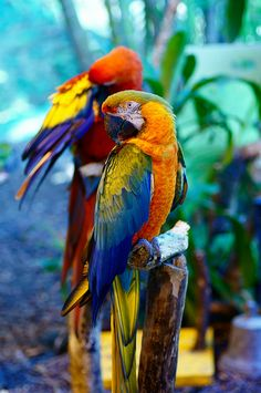 Parrots by, Erhu Fish via flickr.