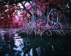 Richard Mosse / Mangrove I / digital c-print / 2014