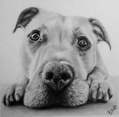 5x5 Inch Custom Graphite Pet Portrait Drawn Using Your Photo