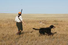Orvis endorsed wingshooting in Montana, Pheasant Hunting, Bird Hunting, Upland Hunting Pheasant Hunting, Grouse, Wild Birds, Habitats, Montana, Sage, North America, Safari, Wildlife