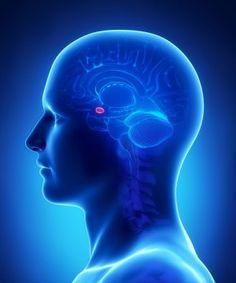 Princeza Amigdala Autor: Predrag Stojadinović Kao što sam u prethodnom tesktu napisao, postoje tri veoma važna psihološka fenomena koji se nazivaju kognitivna disonanca, kognitivna inercija i amigdalina otmica, a koji čine veoma učestale kamene spoticanja u procesu razmišljanja kod ljudi. Amigdala, latinski corpus amygdaloideum od grčkog ἀμυγδαλή (amygdalē) što znači badem, je emocionalni centar mozga, […]