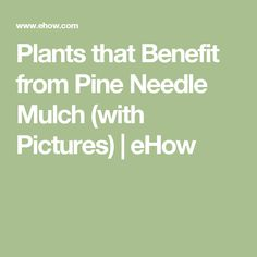 Plants that Benefit from Pine Needle Mulch (with Pictures) | eHow