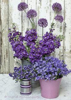Blog Casa e Fogão: Dica na hora de colher uma flor, fruto ou um tempero.